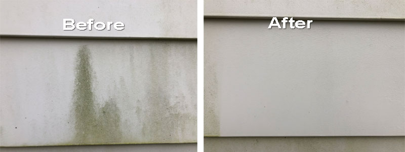 Before and After - Mold Stain Cleaner